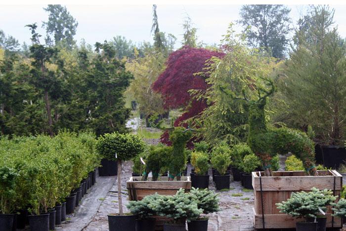 Landscaping Woodland Wa : Nursery plants far west turf farm and