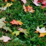 fall lawn maintenance