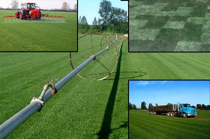 premium sod for Portland, Oregon and Vancouver, WA