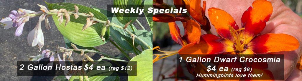Hostas weekly specials
